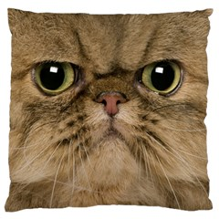 Cute Persian Catface In Closeup Large Flano Cushion Case (one Side)