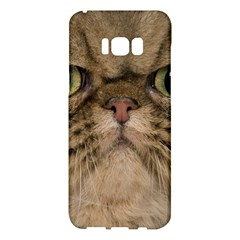 Cute Persian Catface In Closeup Samsung Galaxy S8 Plus Hardshell Case  by BangZart