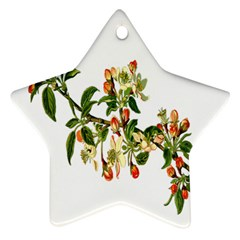 Apple Branch Deciduous Fruit Star Ornament (two Sides) by Nexatart
