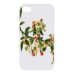 Apple Branch Deciduous Fruit Apple Iphone 4/4s Premium Hardshell Case