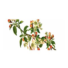 Apple Branch Deciduous Fruit Satin Wrap by Nexatart