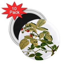 Berries Berry Food Fruit Herbal 2 25  Magnets (10 Pack)