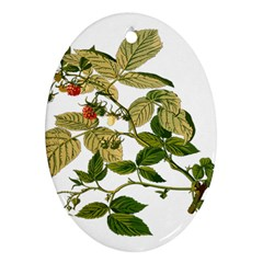 Berries Berry Food Fruit Herbal Oval Ornament (two Sides) by Nexatart