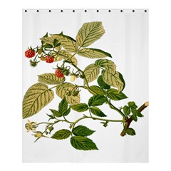 Berries Berry Food Fruit Herbal Shower Curtain 60  X 72  (medium)  by Nexatart