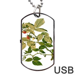 Berries Berry Food Fruit Herbal Dog Tag Usb Flash (one Side)