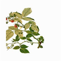 Berries Berry Food Fruit Herbal Small Garden Flag (two Sides) by Nexatart