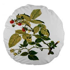 Berries Berry Food Fruit Herbal Large 18  Premium Flano Round Cushions