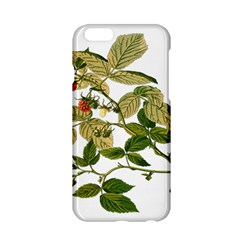 Berries Berry Food Fruit Herbal Apple Iphone 6/6s Hardshell Case by Nexatart