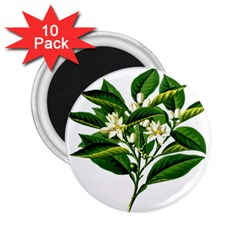 Bitter Branch Citrus Edible Floral 2 25  Magnets (10 Pack)  by Nexatart