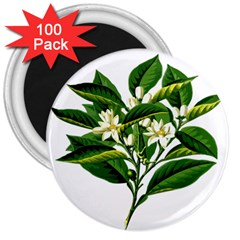 Bitter Branch Citrus Edible Floral 3  Magnets (100 Pack) by Nexatart