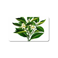 Bitter Branch Citrus Edible Floral Magnet (name Card) by Nexatart