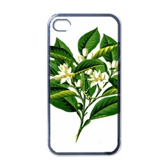 Bitter Branch Citrus Edible Floral Apple Iphone 4 Case (black) by Nexatart