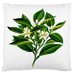 Bitter Branch Citrus Edible Floral Large Flano Cushion Case (one Side) by Nexatart