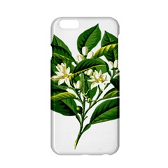 Bitter Branch Citrus Edible Floral Apple Iphone 6/6s Hardshell Case by Nexatart