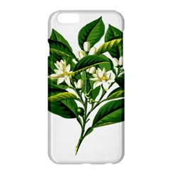 Bitter Branch Citrus Edible Floral Apple Iphone 6 Plus/6s Plus Hardshell Case