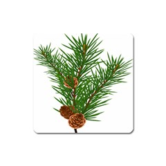 Branch Floral Green Nature Pine Square Magnet by Nexatart