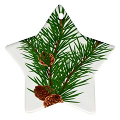 Branch Floral Green Nature Pine Star Ornament (two Sides) by Nexatart