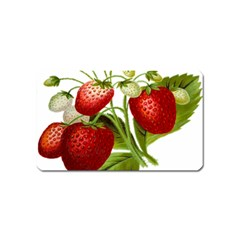 Food Fruit Leaf Leafy Leaves Magnet (name Card) by Nexatart