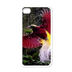 Cendrawasih Beautiful Bird Of Paradise Apple Iphone 4 Case (white) by BangZart