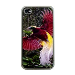 Cendrawasih Beautiful Bird Of Paradise Apple Iphone 4 Case (clear)