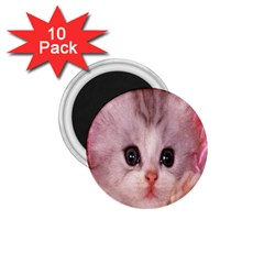Cat  Animal  Kitten  Pet 1 75  Magnets (10 Pack)
