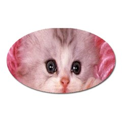 Cat  Animal  Kitten  Pet Oval Magnet by BangZart