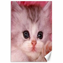 Cat  Animal  Kitten  Pet Canvas 20  X 30   by BangZart