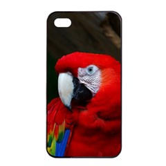 Scarlet Macaw Bird Apple Iphone 4/4s Seamless Case (black)