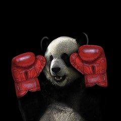 Boxing Panda  Magic Photo Cubes