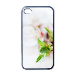 Fragility Flower Petals Tenderness Leaves  Apple Iphone 4 Case (black) by amphoto