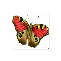 Butterfly Bright Vintage Drawing Square Magnet