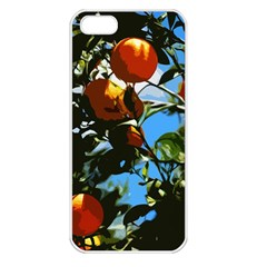 Orange Tree Apple Iphone 5 Seamless Case (white) by Valentinaart