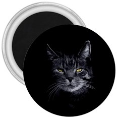 Domestic Cat 3  Magnets by Valentinaart