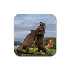 Komodo Dragons Fight Rubber Coaster (square)  by Nexatart