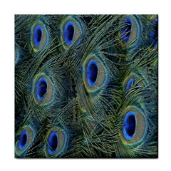 Peacock Feathers Blue Bird Nature Tile Coasters