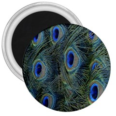 Peacock Feathers Blue Bird Nature 3  Magnets by Nexatart