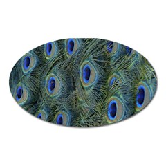 Peacock Feathers Blue Bird Nature Oval Magnet