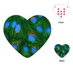 Fluorescence Microscopy Green Blue Playing Cards (heart)