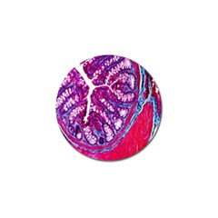 Histology Inc Histo Logistics Incorporated Masson s Trichrome Three Colour Staining Golf Ball Marker (10 Pack)