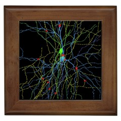 Synaptic Connections Between Pyramida Neurons And Gabaergic Interneurons Were Labeled Biotin During Framed Tiles