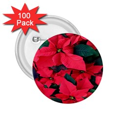 Red Poinsettia Flower 2 25  Buttons (100 Pack)  by Mariart