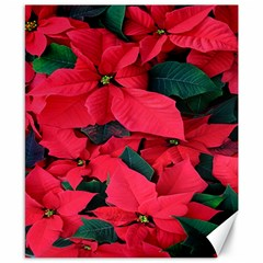 Red Poinsettia Flower Canvas 8  X 10  by Mariart
