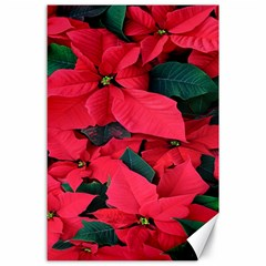 Red Poinsettia Flower Canvas 24  X 36
