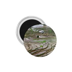 Rice Fields Terraced Terrace 1 75  Magnets by Nexatart