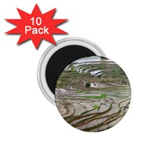 Rice Fields Terraced Terrace 1 75  Magnets (10 Pack)  by Nexatart