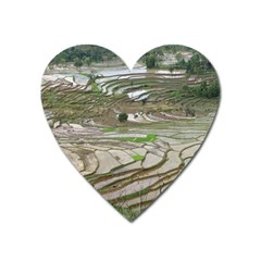 Rice Fields Terraced Terrace Heart Magnet by Nexatart