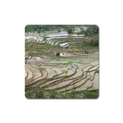 Rice Fields Terraced Terrace Square Magnet by Nexatart