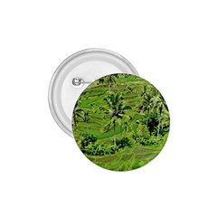 Greenery Paddy Fields Rice Crops 1 75  Buttons by Nexatart