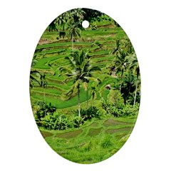 Greenery Paddy Fields Rice Crops Ornament (oval) by Nexatart