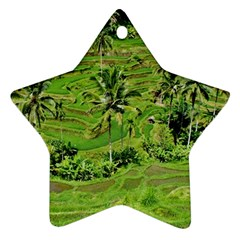 Greenery Paddy Fields Rice Crops Ornament (star)